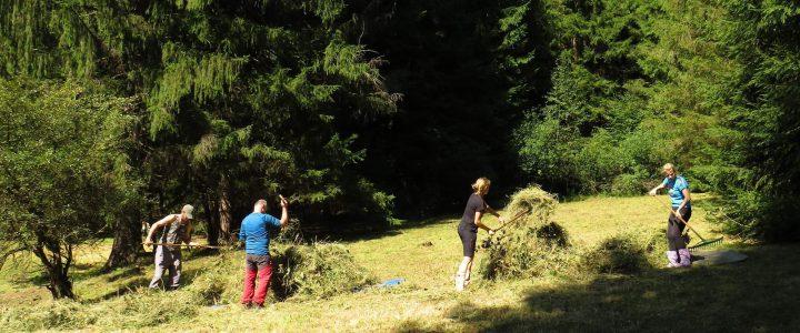 Gorol camp